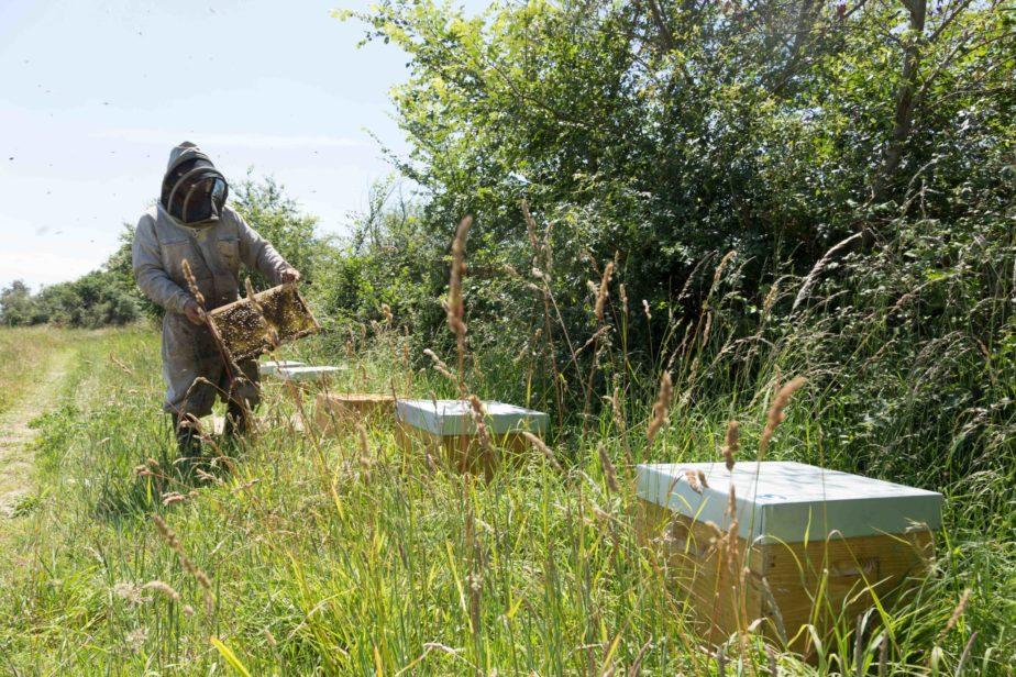 Biodiversite-ruches-abeilles-pollinisateur-grand-fermage