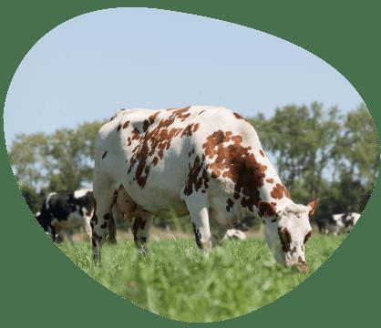 Bulle-le-saviez-vous-prairies-biodiversite-grand-fermage