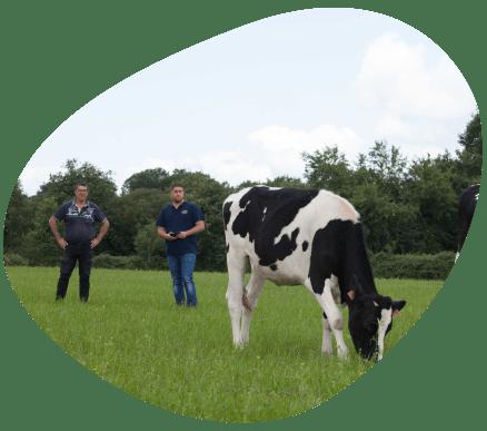 Bulle-territoire-pays-de-la-loire-vaches-laitieres-grand-fermage