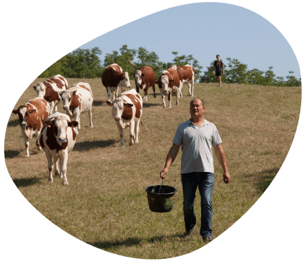 Bulle-territoire-rhone-alpes-eleveur-vaches-laitieres-grand-fermage