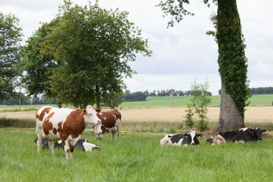 Territoire-centre-val-de-loire-cereale-vaches-laitieres-grand-fermage