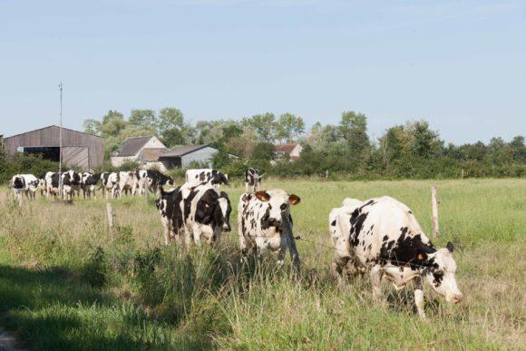 Territoire-centre-val-de-loire-vaches-laitieres-climat-grand-fermage