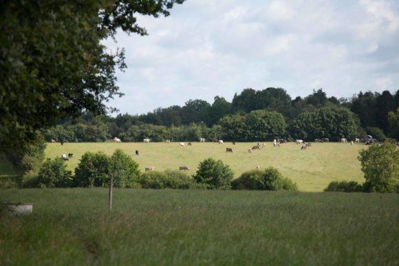 Territoire-pays-de-la-loire-vaches-laitieres-grand-fermage