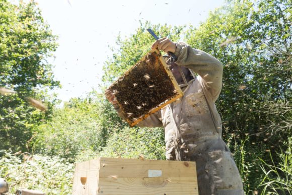 Territoire-rhone-alpes-abeilles-ruches-grand-fermage