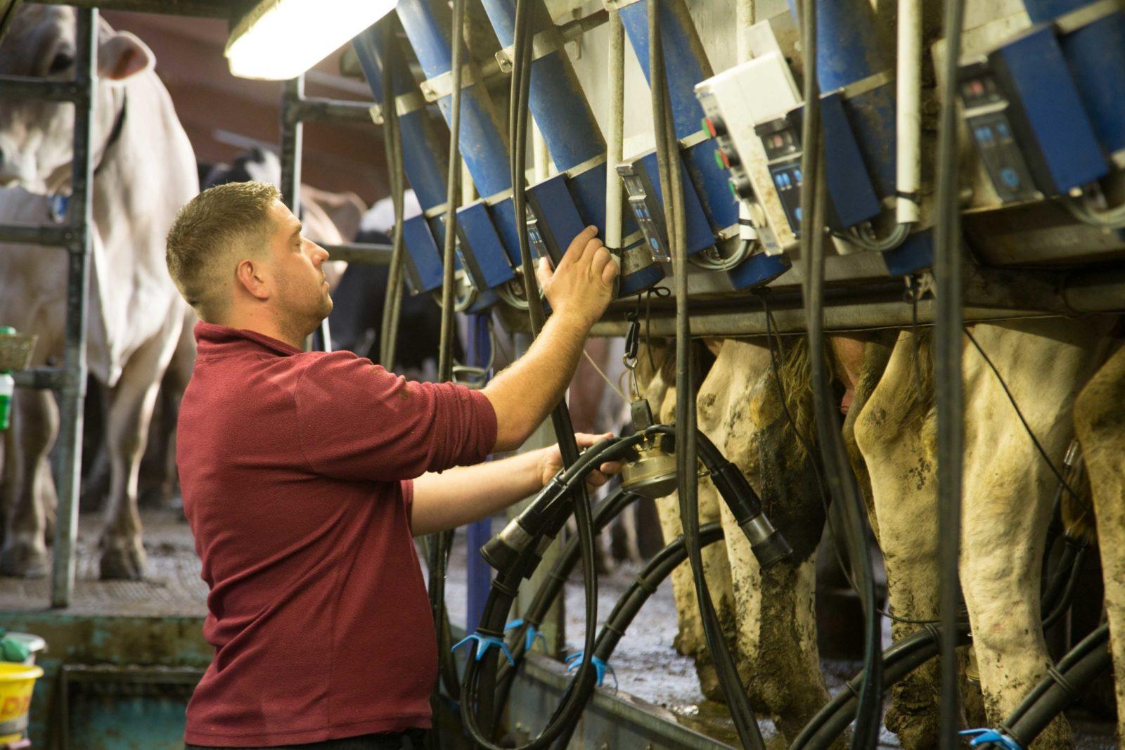 Valentin-quotidien-des-eleveurs-vaches-laitieres-deuxieme-traite-grand-fermage