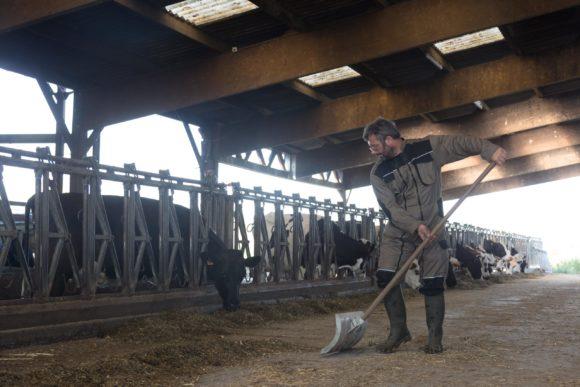 weel-being-animal-food-breeders-dairy-cows-grand-fermage