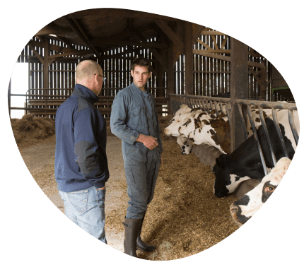 well-being-veterinary-dairy-cows-grand-fermage