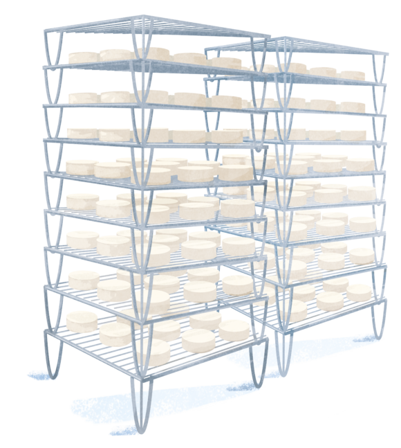 manufacturing-cheese-step-8-ripening-grand-fermage
