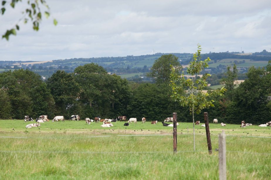 Territoire-normandie-vaches-laitieres-eleveur-grand-fermage