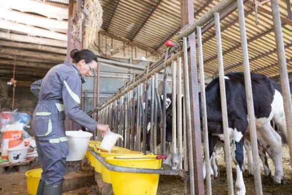 animal-well-being-dairy-cows-breeders-grand-fermage